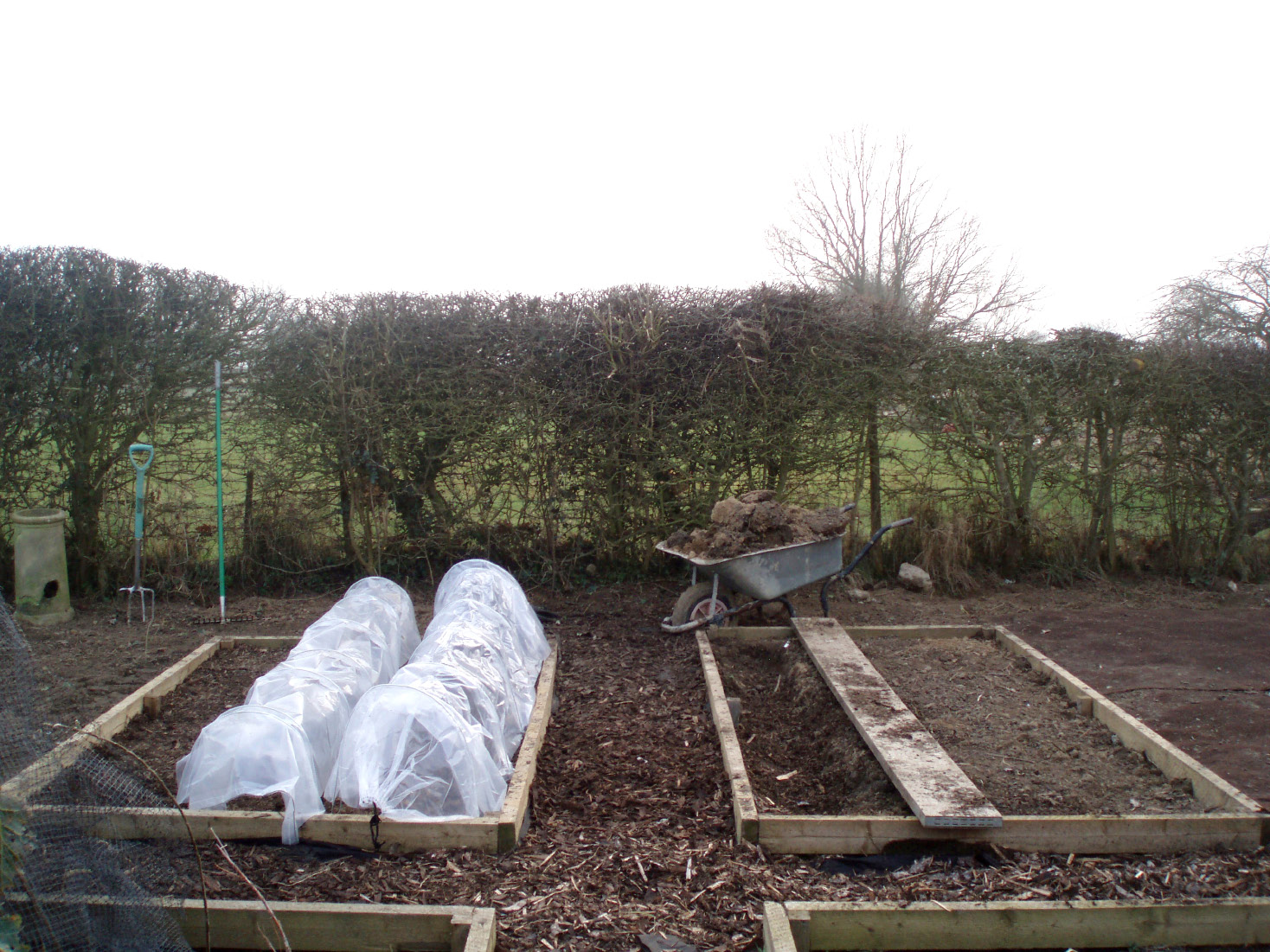 Sow some early crops... The soil can be warmed in readiness with cloches or plastic sheeting
