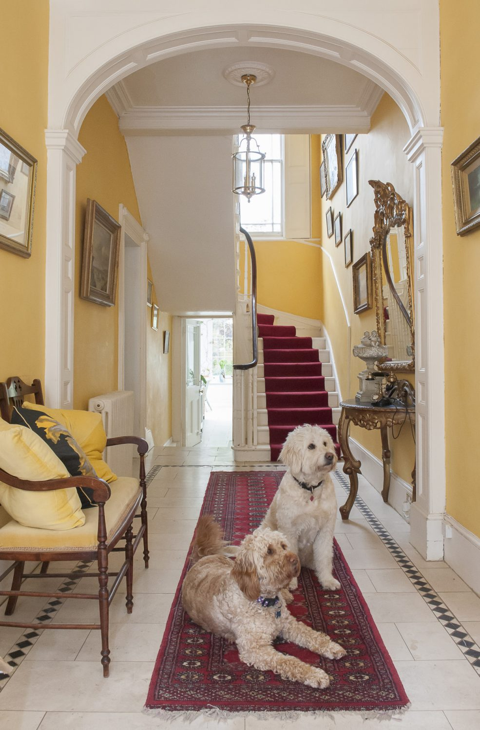 Dawn's Goldendoodles wait patiently to be photographed in the hallway