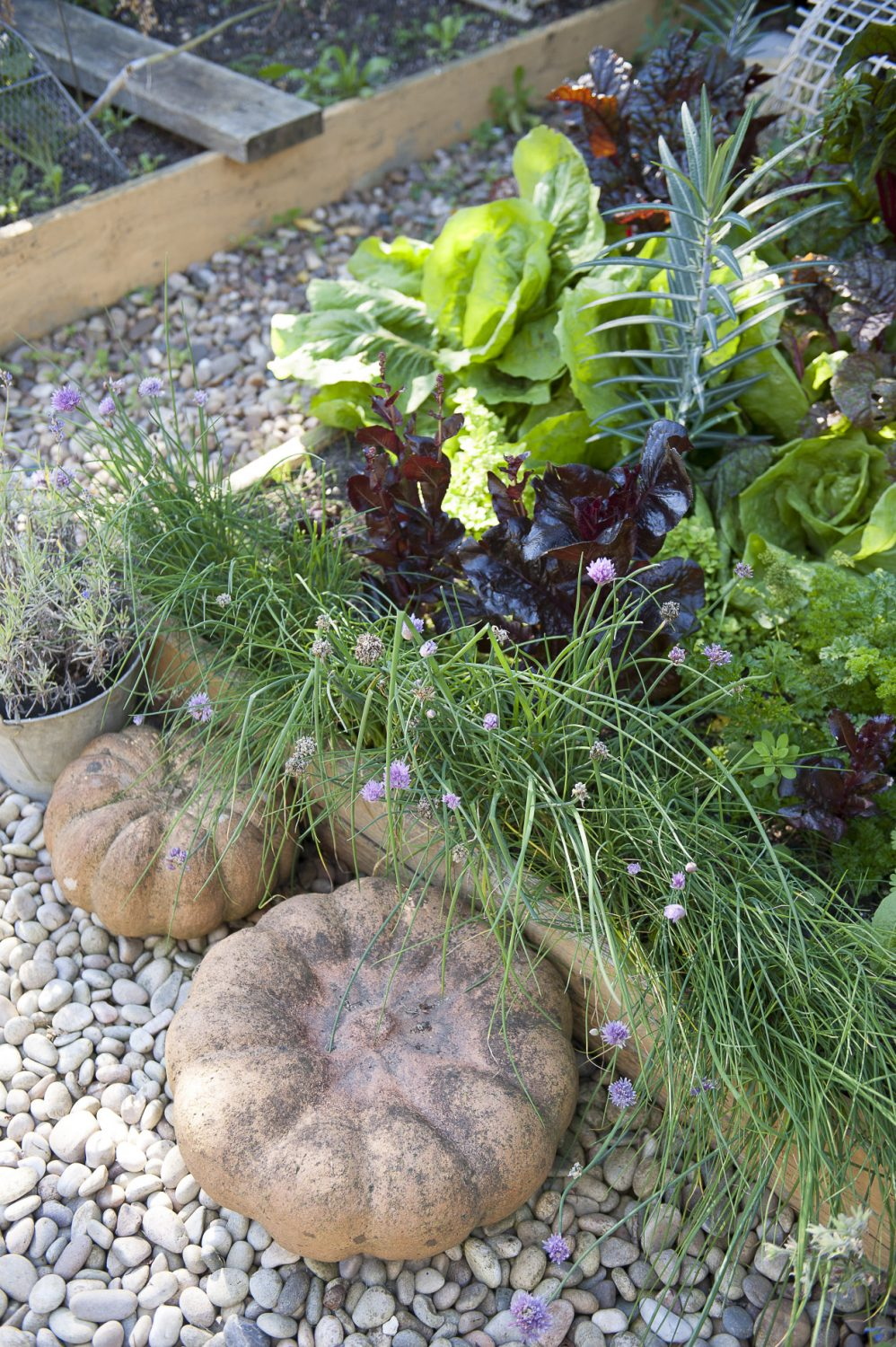 Herbs and salad plants destined for the kitchen