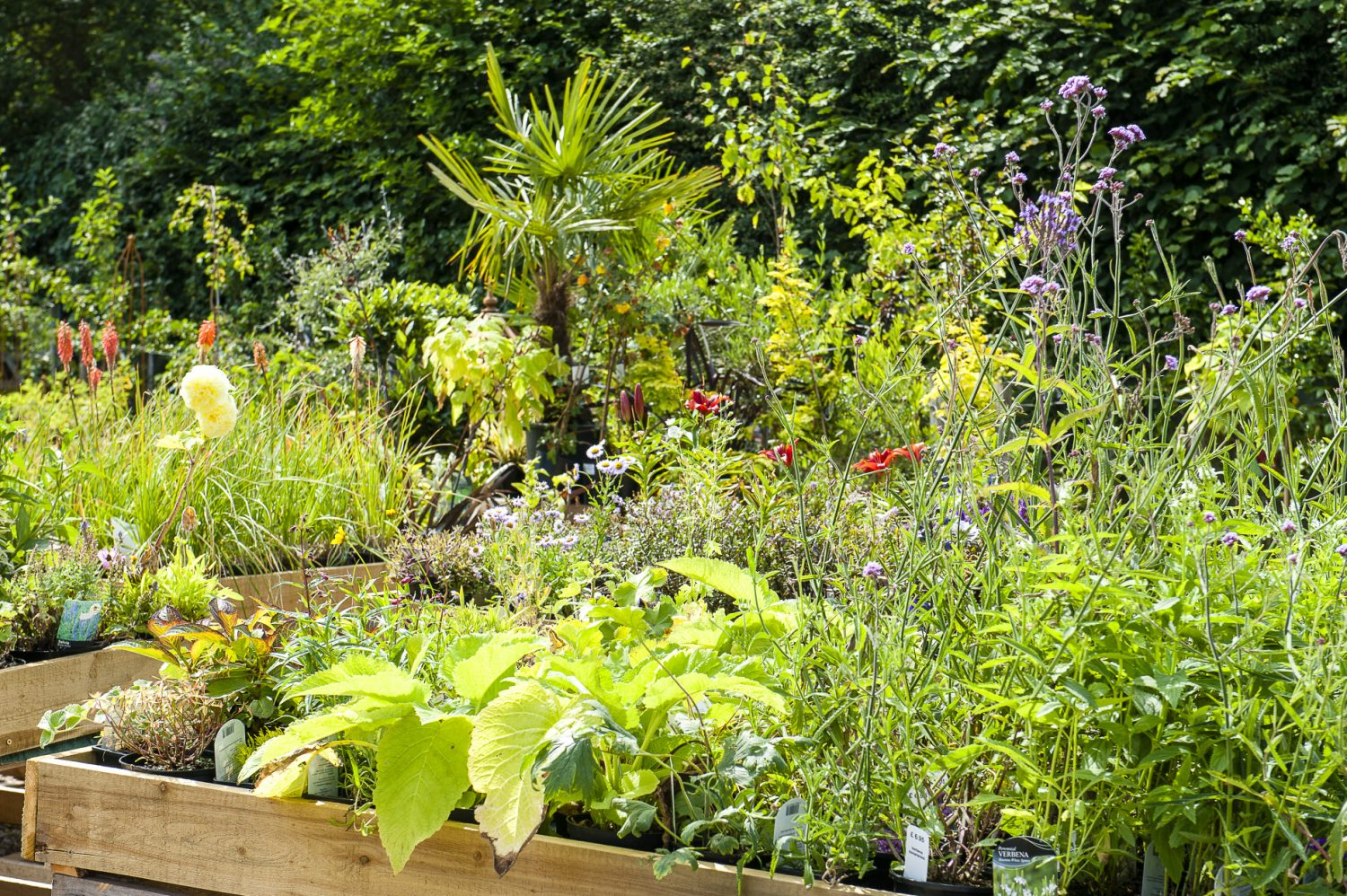 A raised bed full of vibrant planting