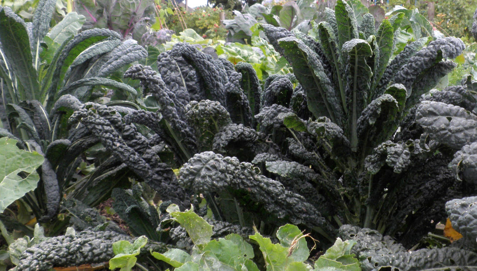 chard seems to be indestructible and I find leeks and kale to be resistant to the worst of the weather, and not especially attacked by pests