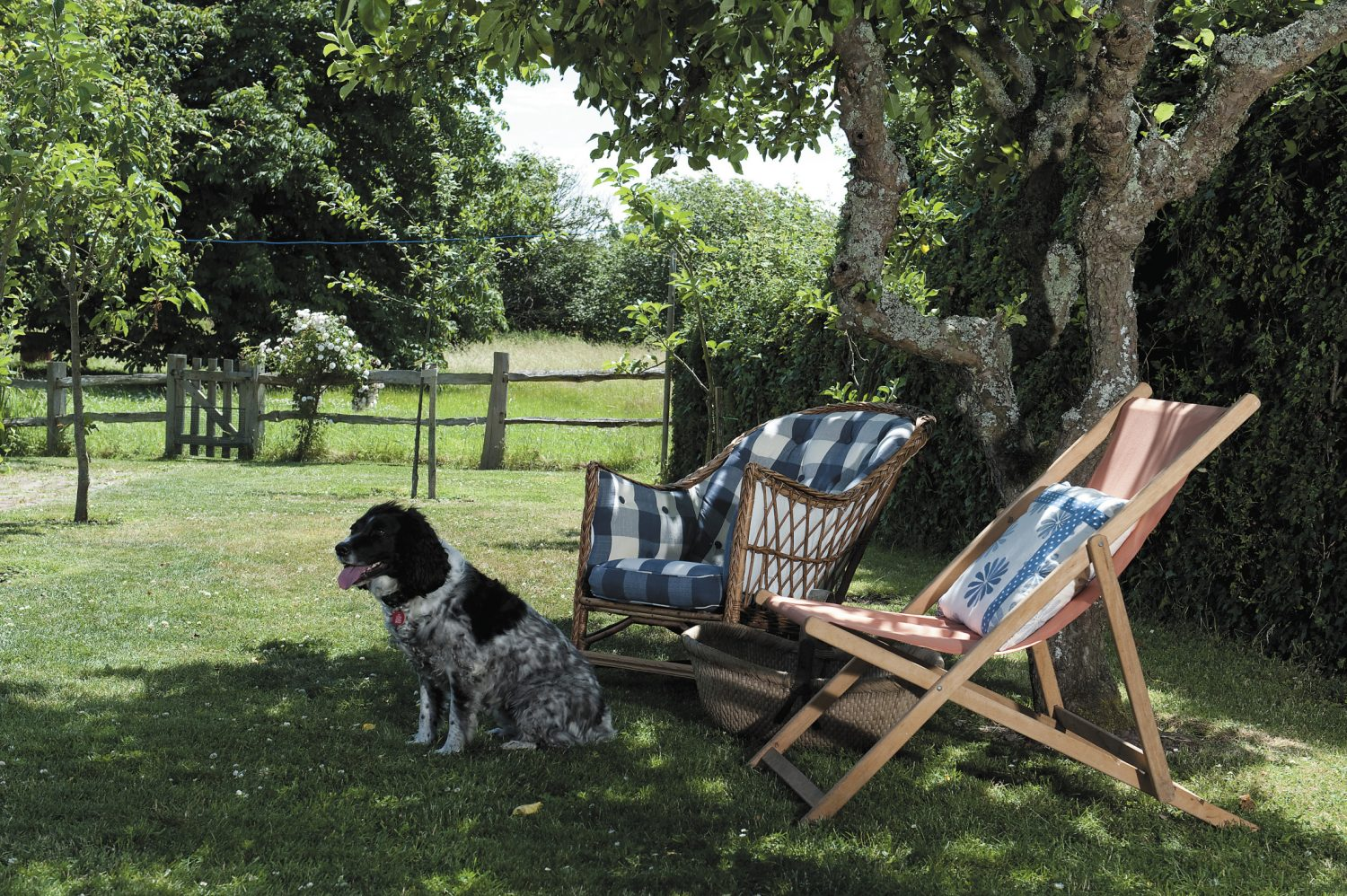 In the shade of a spreading apple tree a deckchair and cane seat have been placed in a conversational group