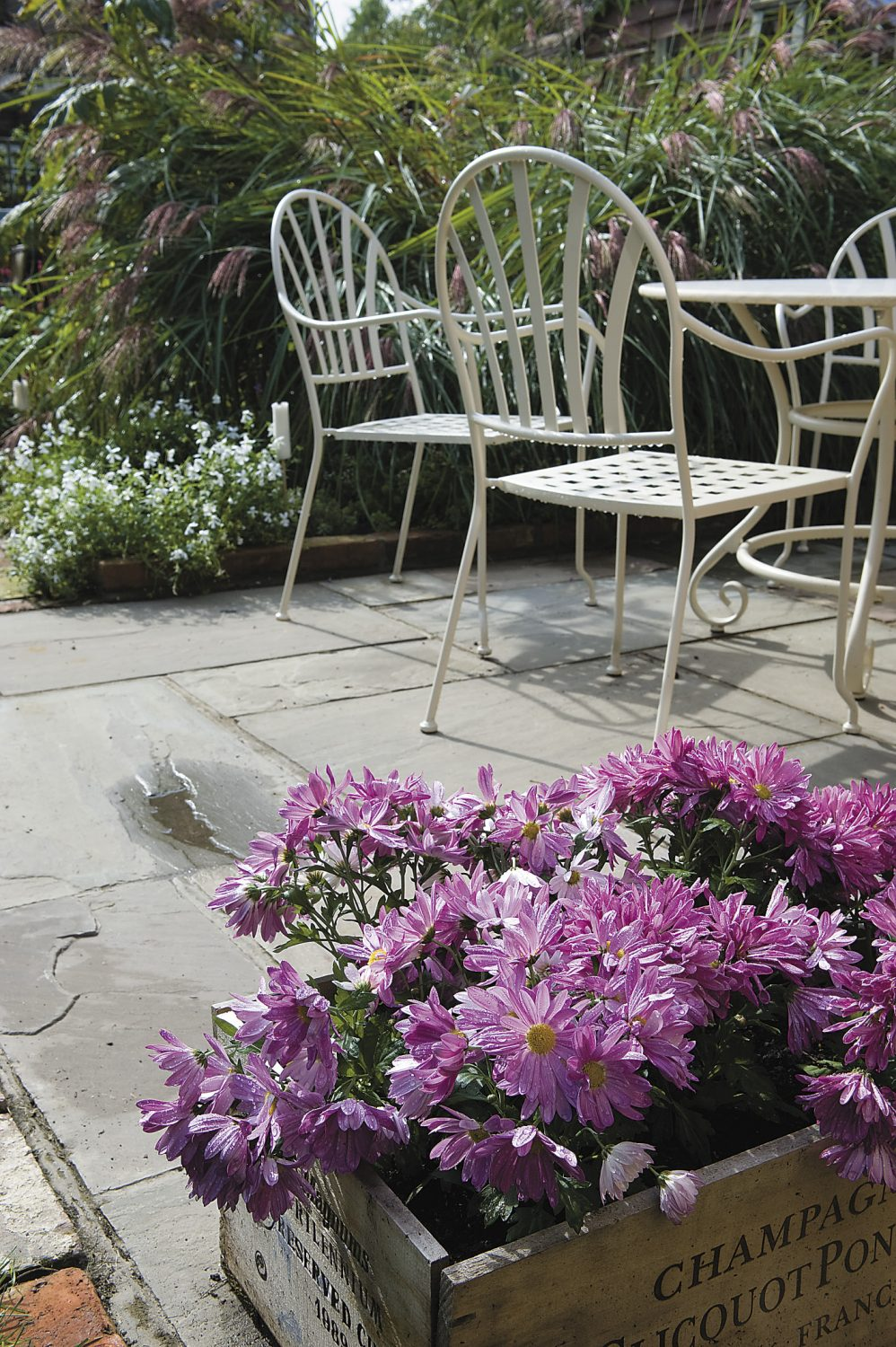 a terraced area outside Kate's office is a perfect place to sit and enjoy the garden in the October sunshine