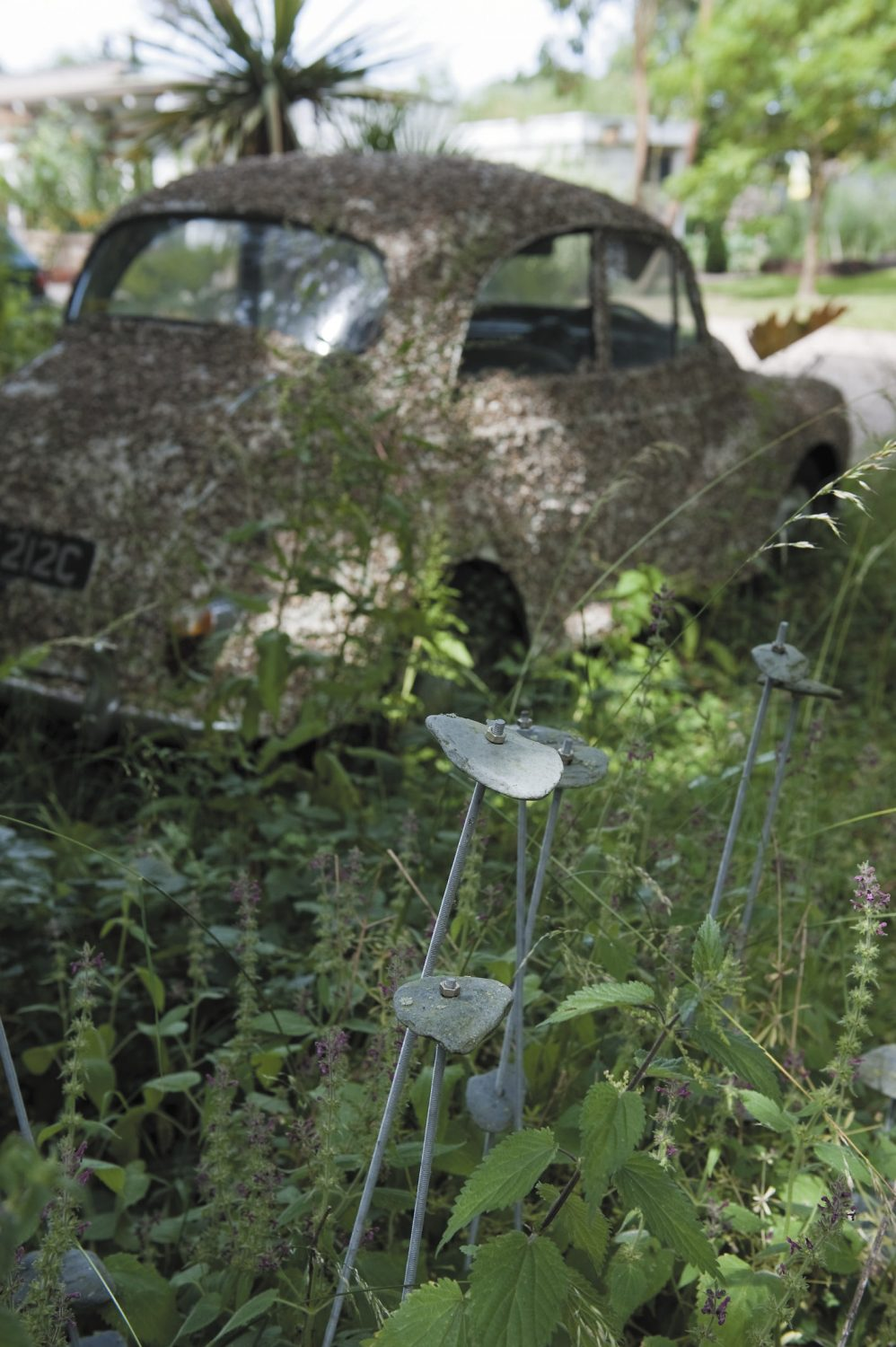 Dozing in the shade amid wild flowers and ornamental rhubarb is a 1960s Morris Minor, pebble-dashed with gravel left over from resurfacing the drive
