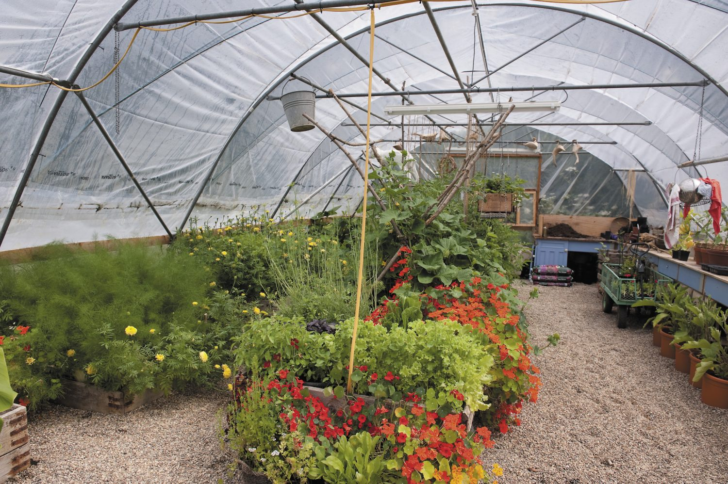 Lizzie's favourite spring haunt, the polytunnel, can be found across the stream, brimming with salad crops and yet more flowers Left: The crimson former beach hut, that belonged to Lizzie's father, adds a pleasing pop of colour amongst the garden foliage