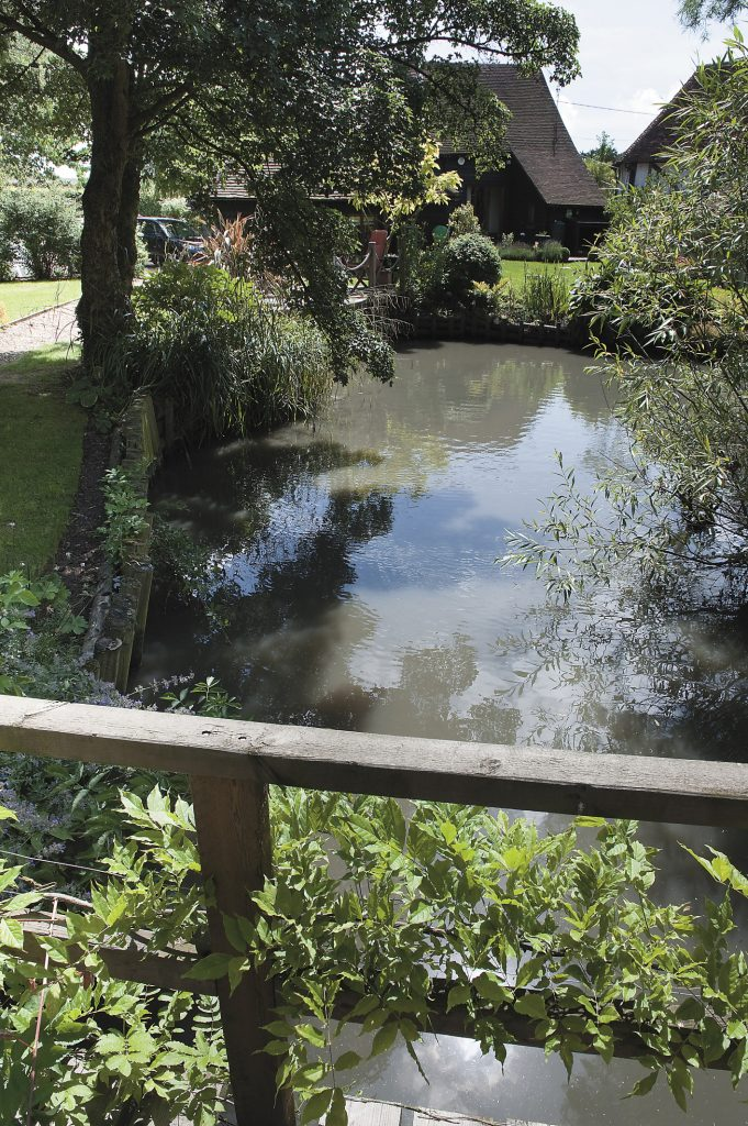 the tranquil pond is a haven for wildlife