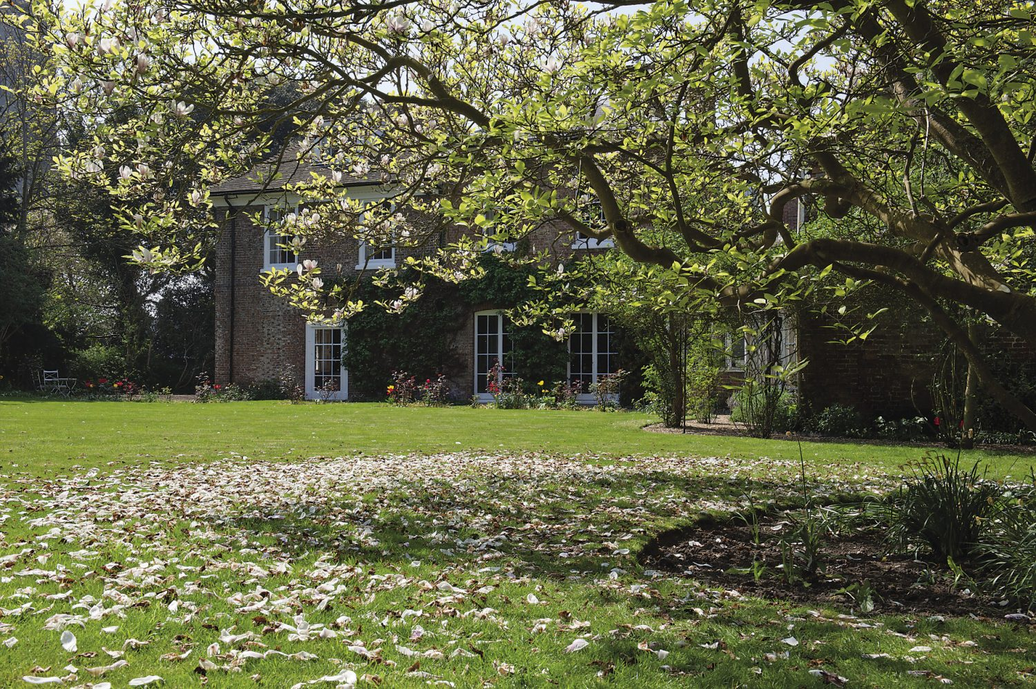A beautiful magnolia tree stands proudly in the centre of the garden
