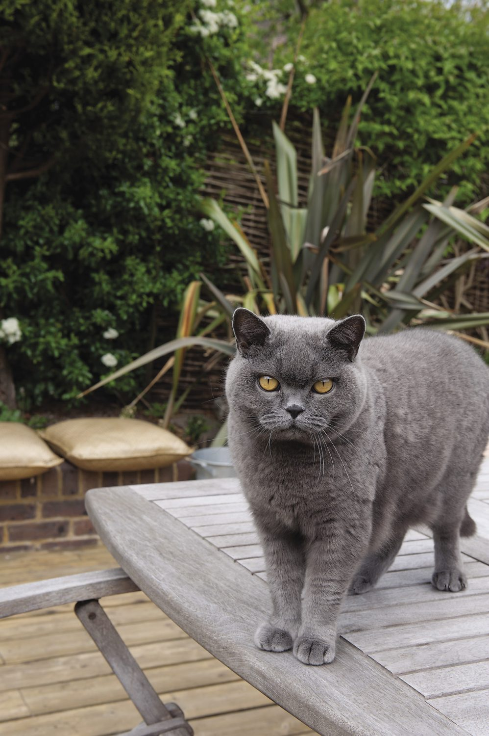 Zanzibar strikes a pose on the garden table
