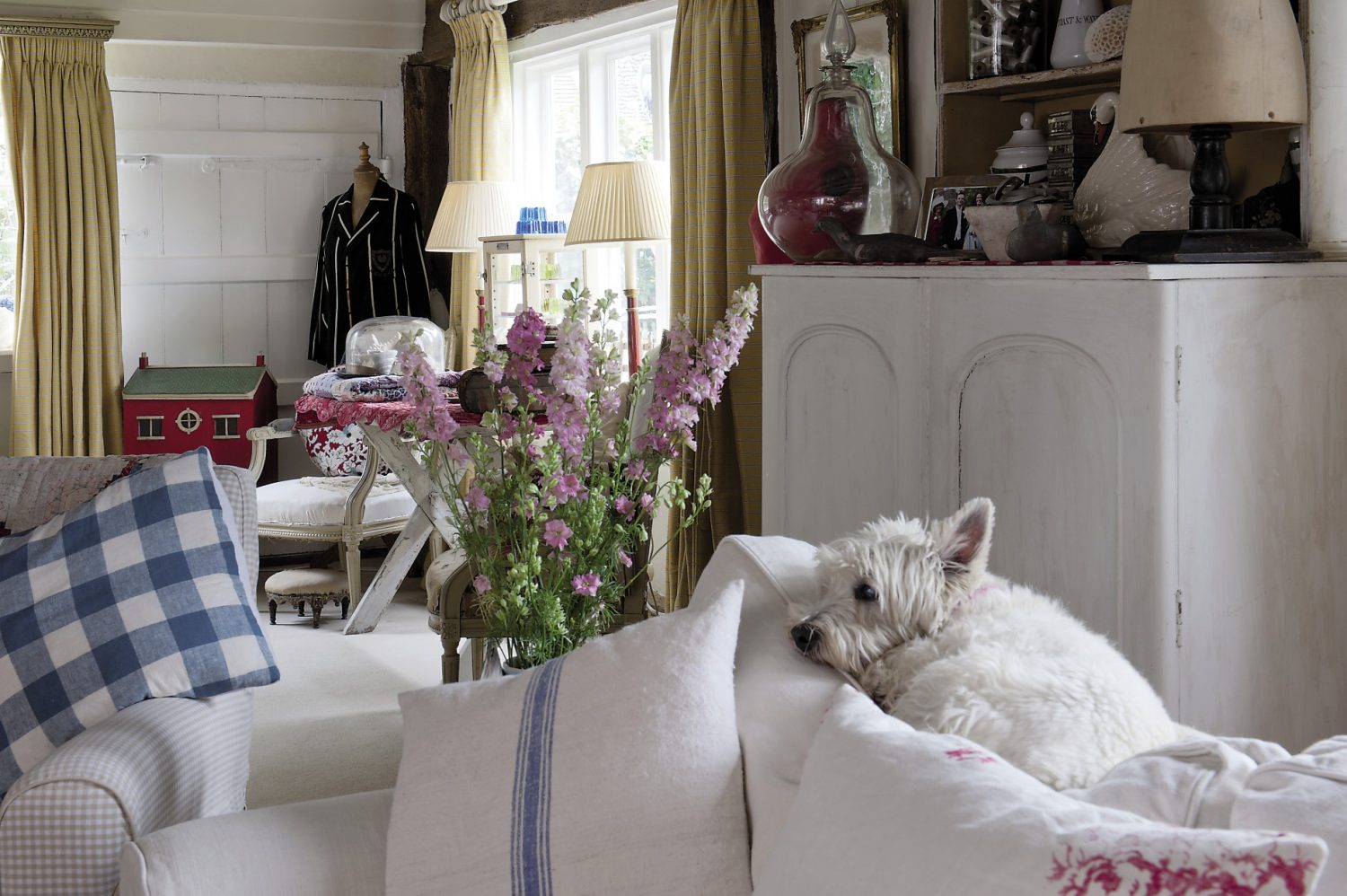Madeline's West Highland Terrier, Hattie, curls up on the top of a sofa