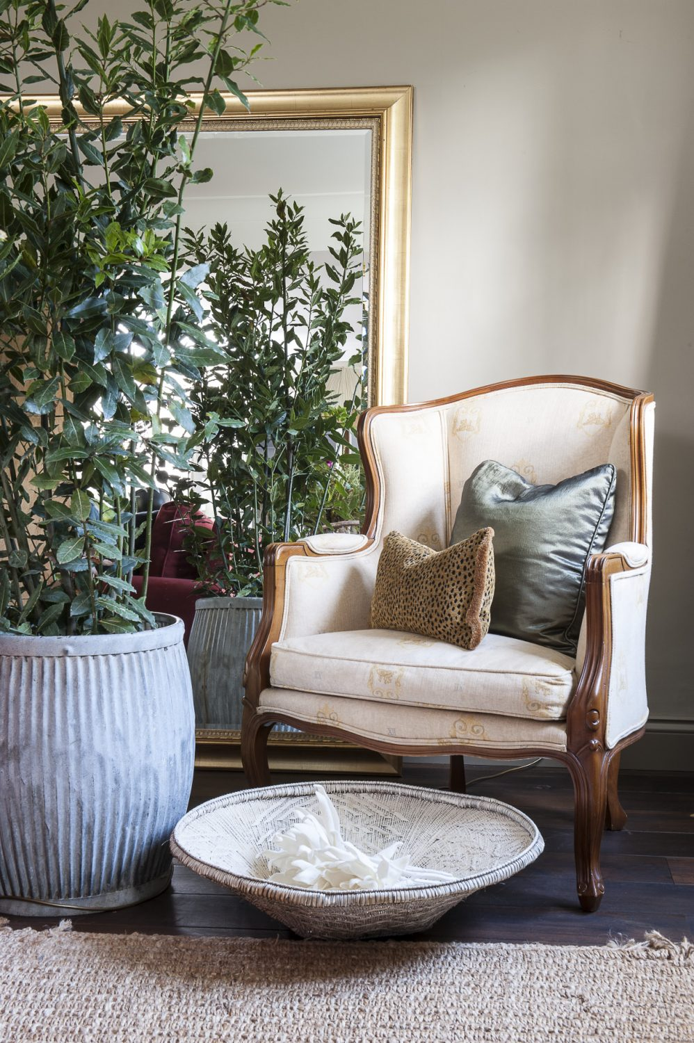 A bay tree stands in a large metal dolly tub from Blooms Furniture in Southborough