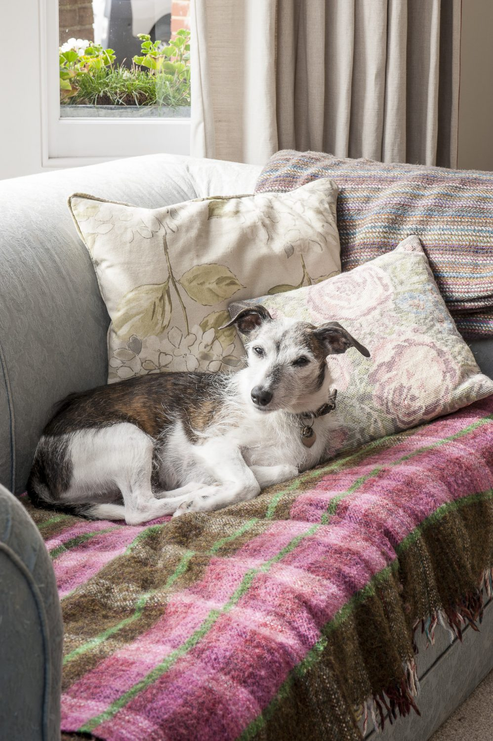 Mr Dogsby relaxes on one of the sofas