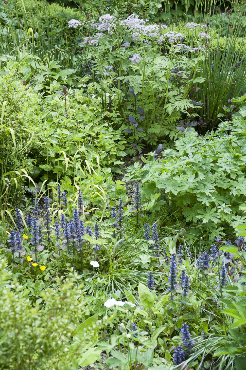 The garden has two main aspects: an open, sunny side in front of the kitchen window that leads down to the vegetable patch and a wonderful shady slope behind the house