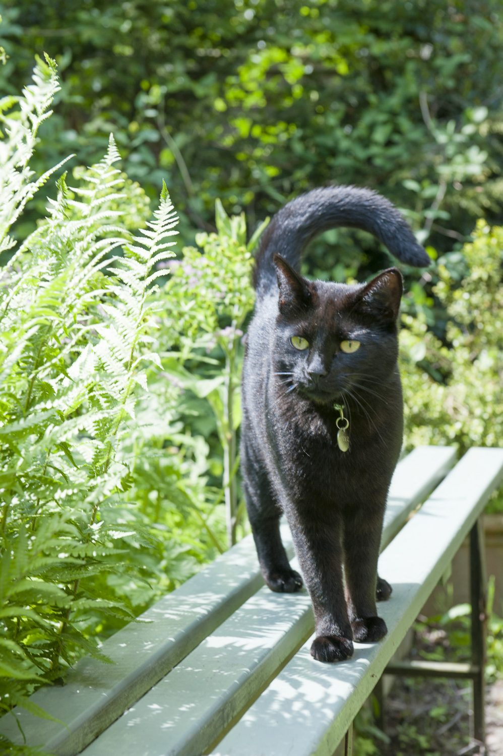 Spider the black cat soaks up some sunshine on a bench