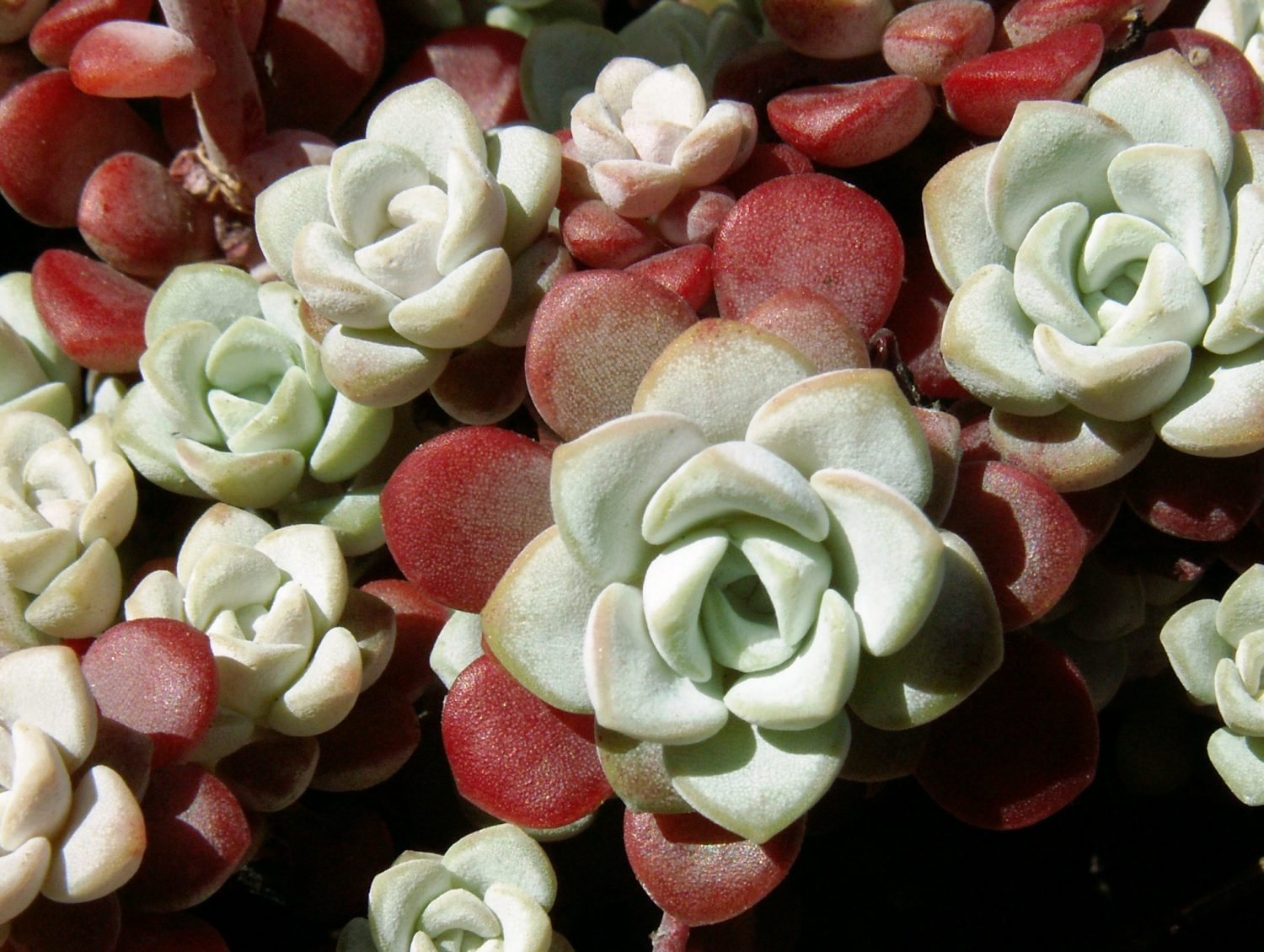 Flora Locale is a good resource for information about plants to encourage bio-diversity