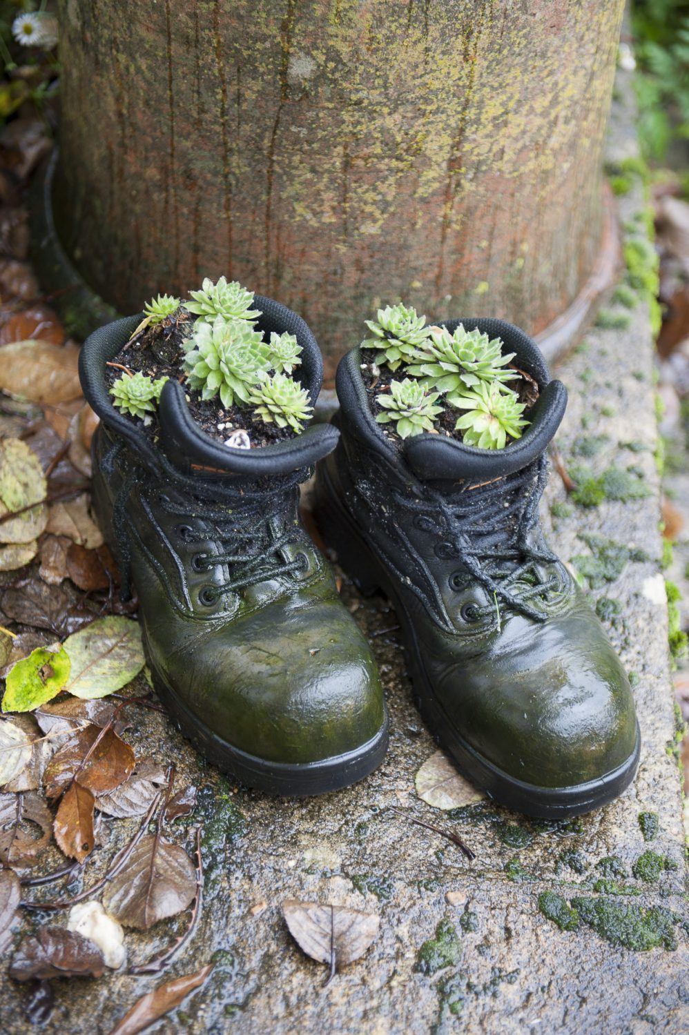 Corners of Claire's informal garden, including a pair of her old work boots planted with sempervivums