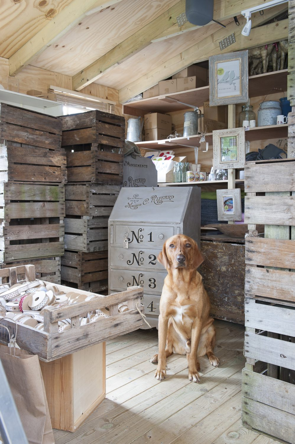 Bertie the Labrador sits patiently amongst a new delivery of old wooden pear crates which Tina intends to use to display Liberty Bee products at fairs and shows