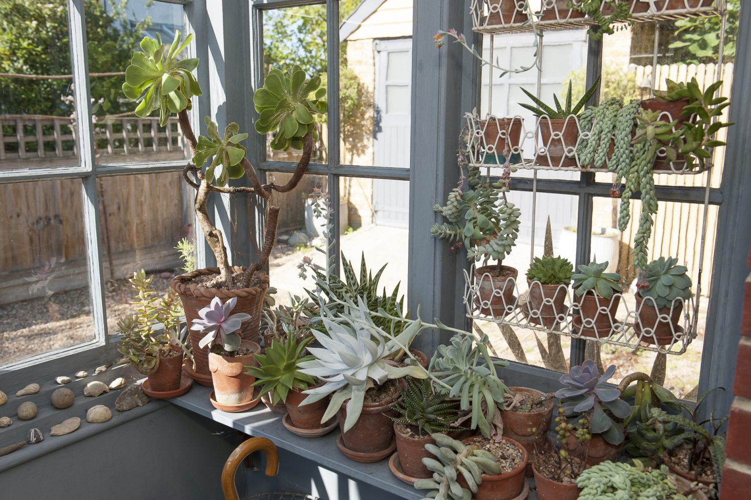 A side porch full of curious succulents makes it hard not to dally on your way in or out of the house