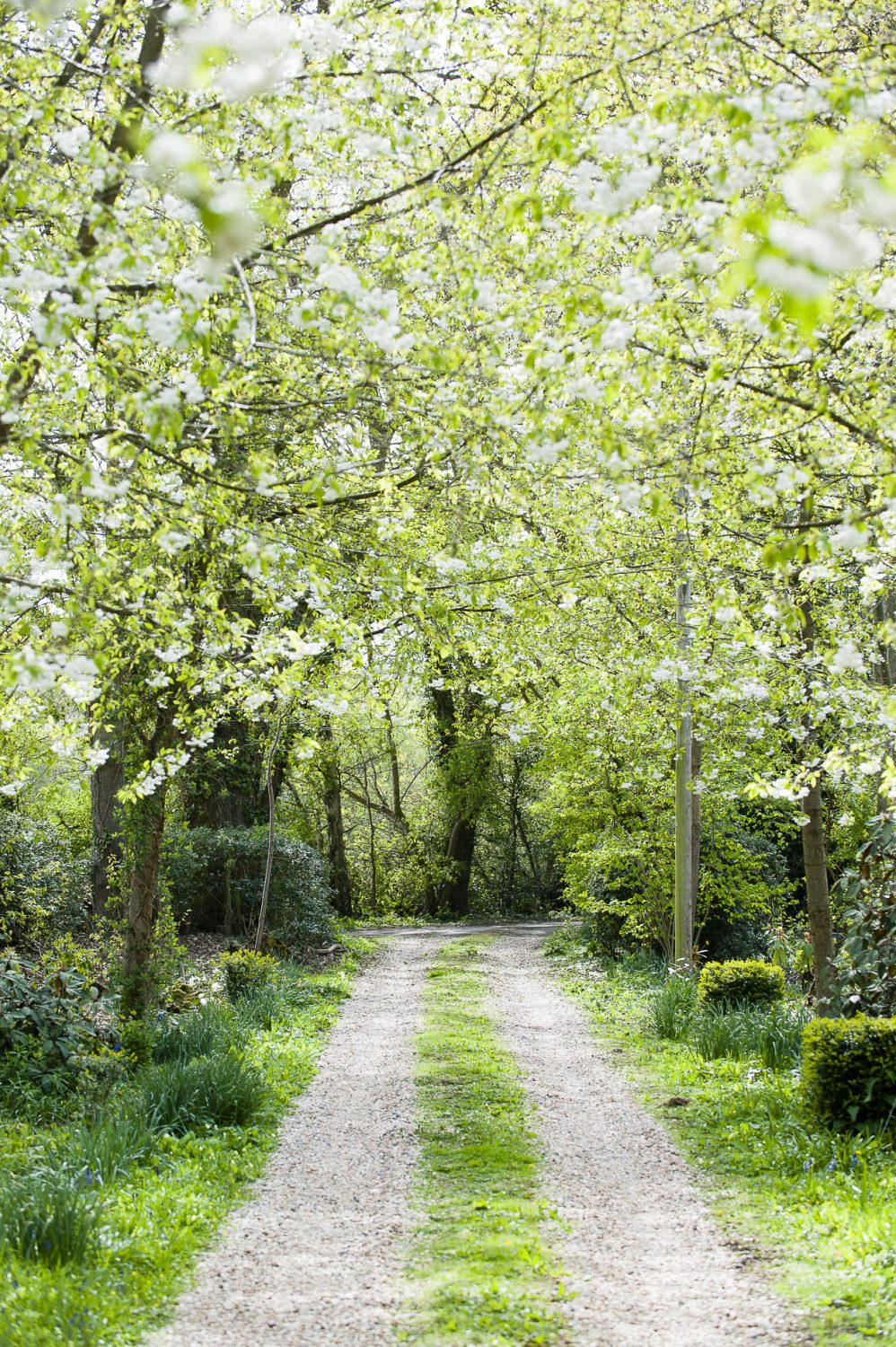 The woods are brimming with blossom and bluebells