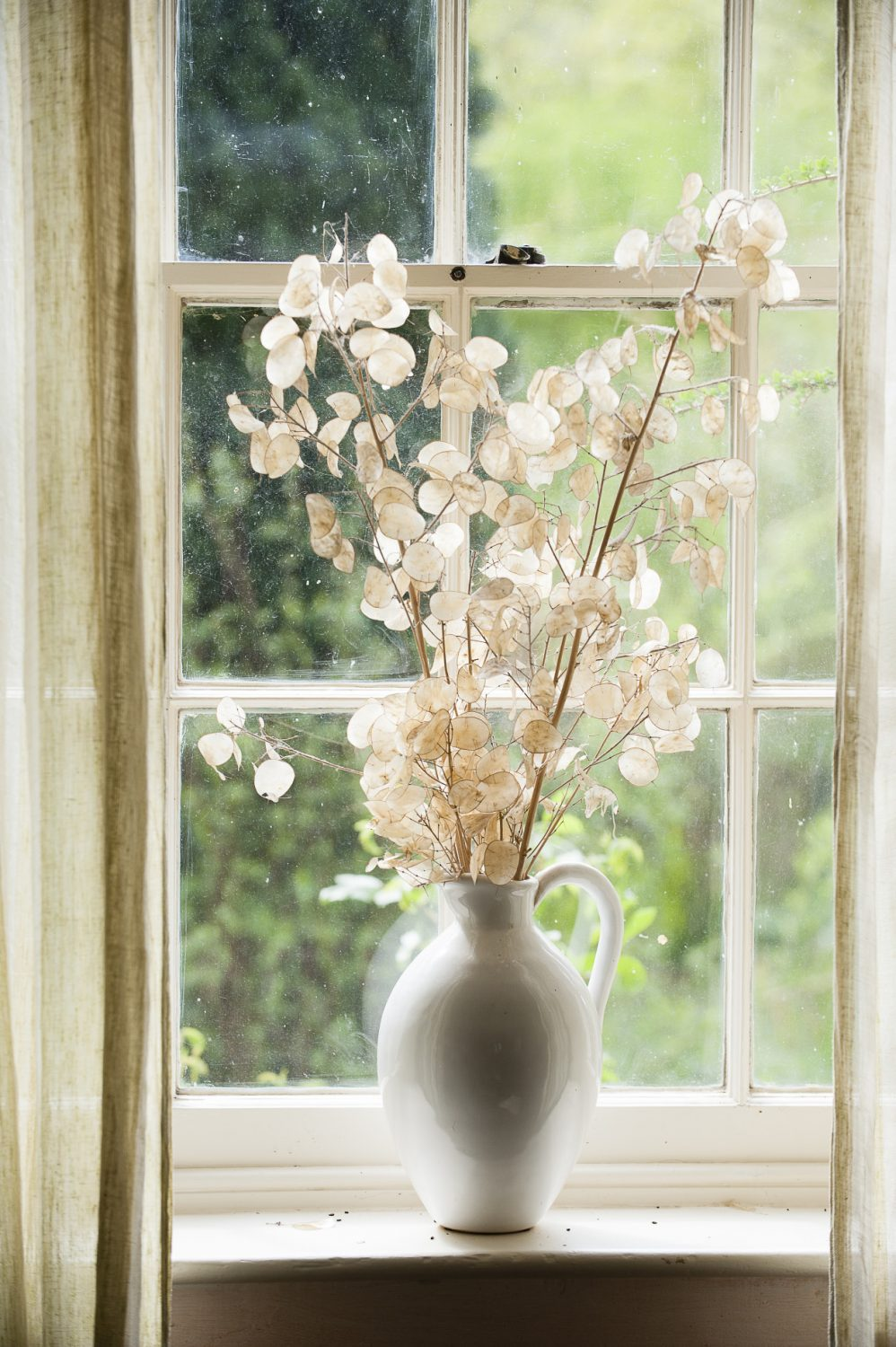 A jug of dried honesty catches the light beautifully on a windowsill