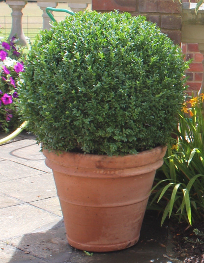 Pots can be repositioned throughout the year
