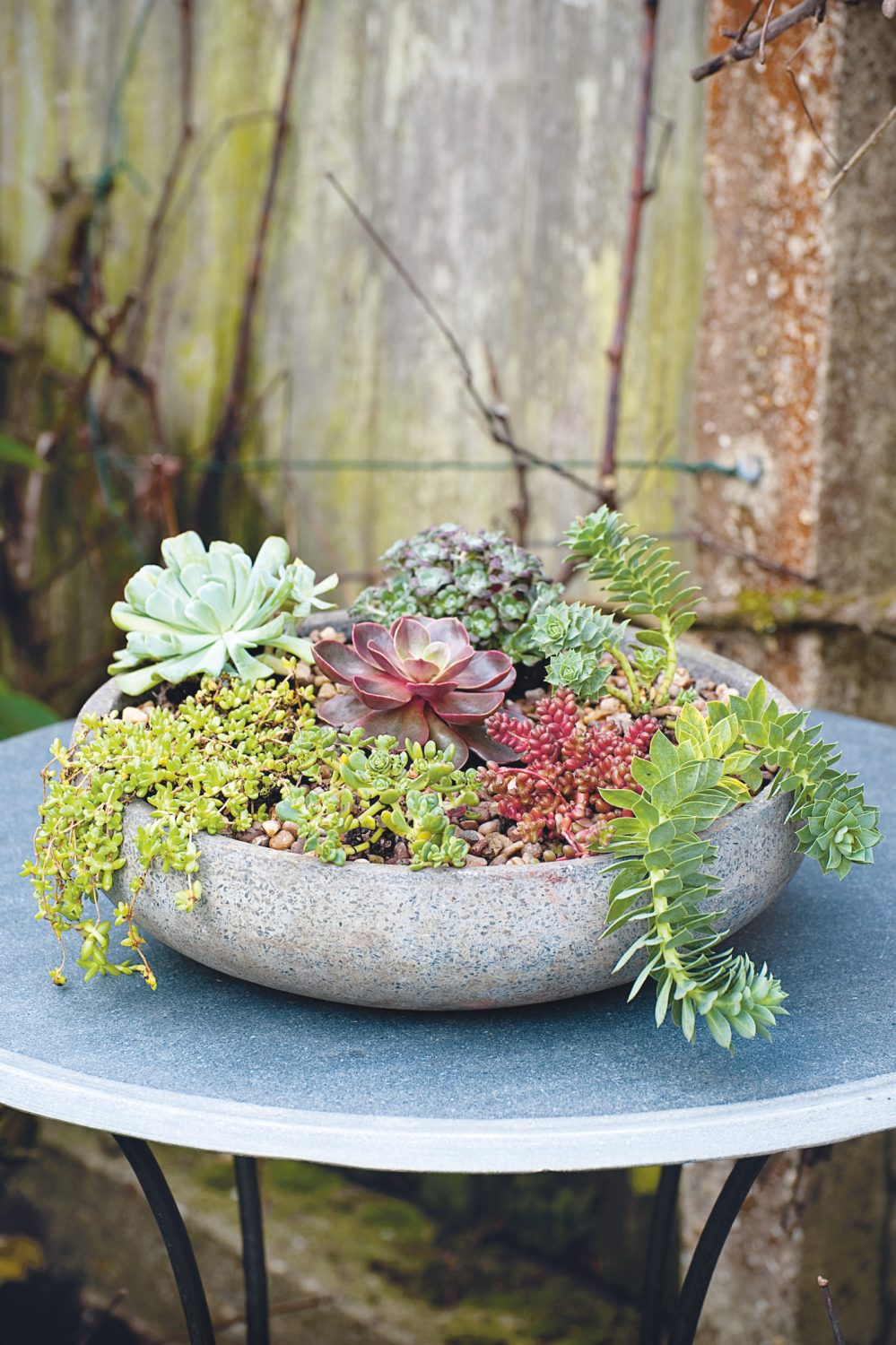These low-lying succulents in a variety of colours in a shallow concrete planter make a wonderful miniature winter garden
