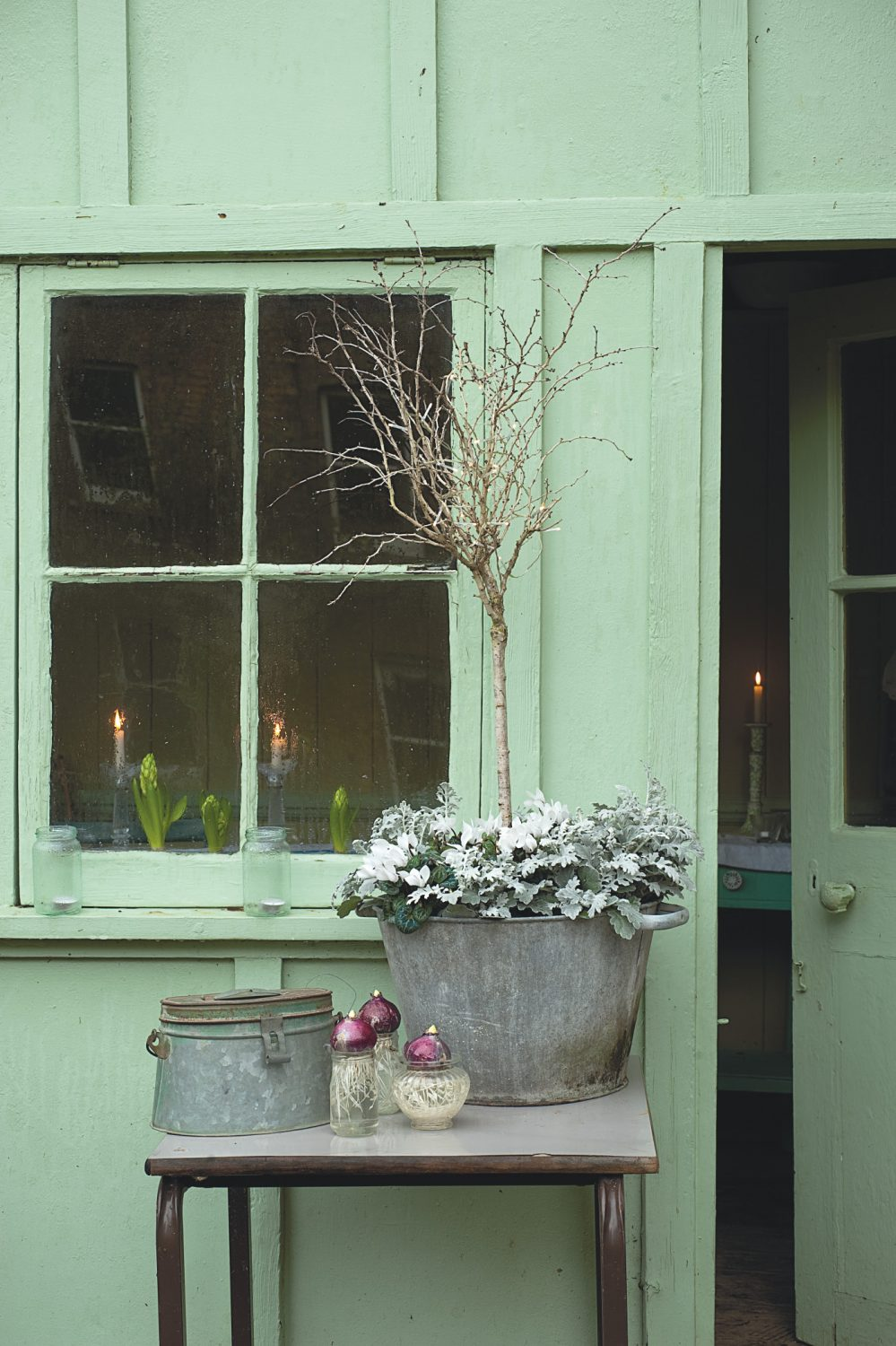 This sweet little prunus tree with bare twiggy branches looks cute on its own, but underplanting it with senecio and cyclamen transforms it into a garden feature