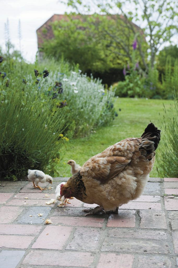 these brand-new chicks enjoy breakfast on the terrace with views over the garden to the studio beyond