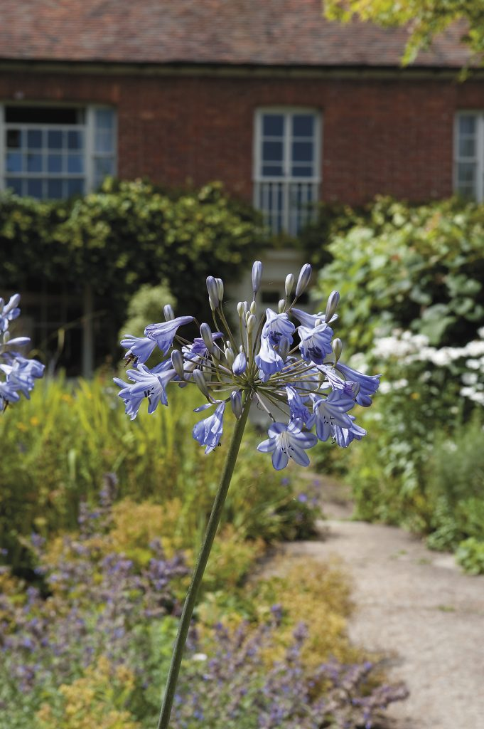 the distinctive Georgian windows allow the house to welcome in the glorious country garden that was planted up by Matt Reece, the former assistant gardener at Great Dixter ...