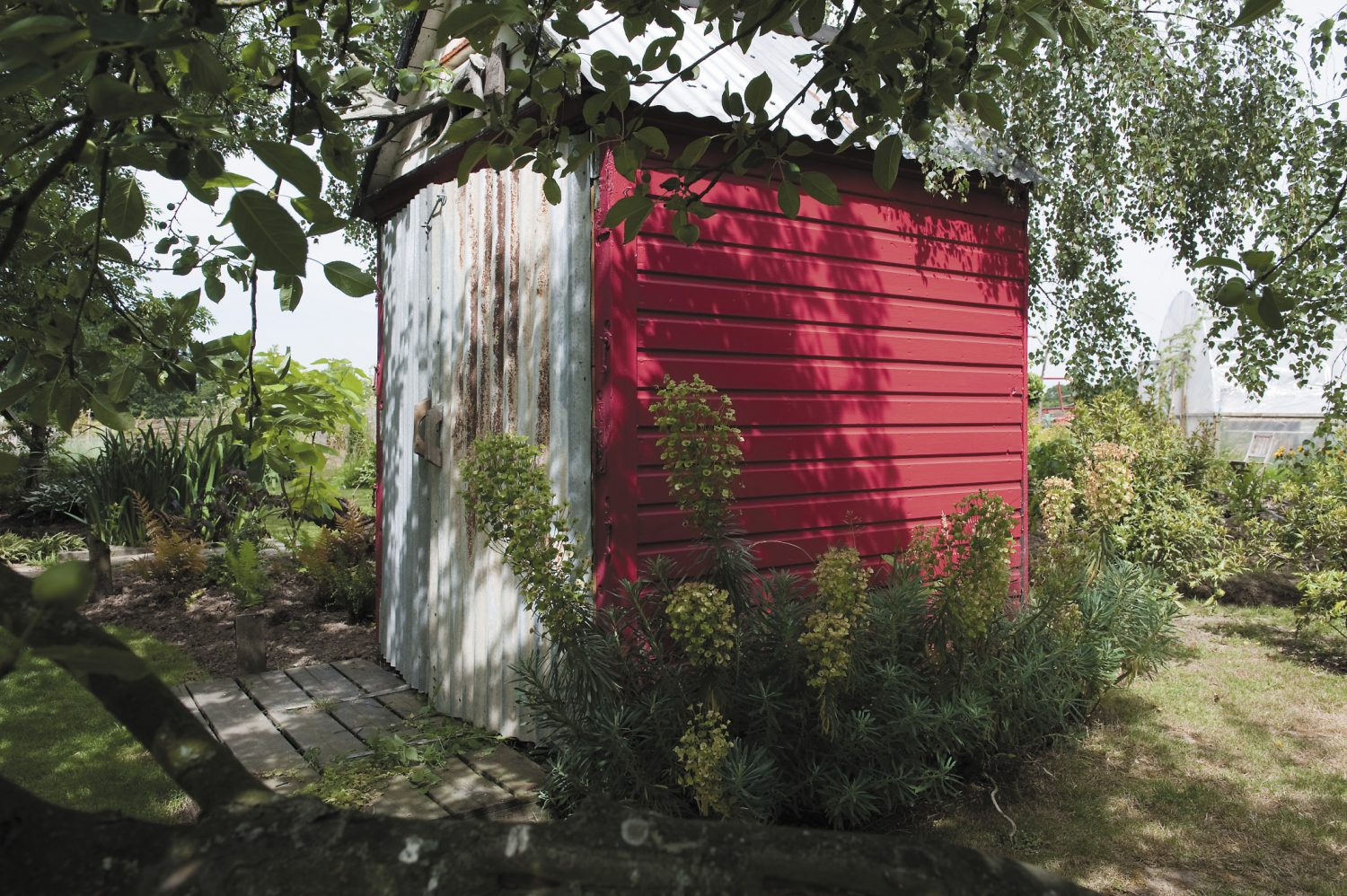 The crimson former beach hut, that belonged to Lizzie's father, adds a pleasing pop of colour amongst the garden foliage