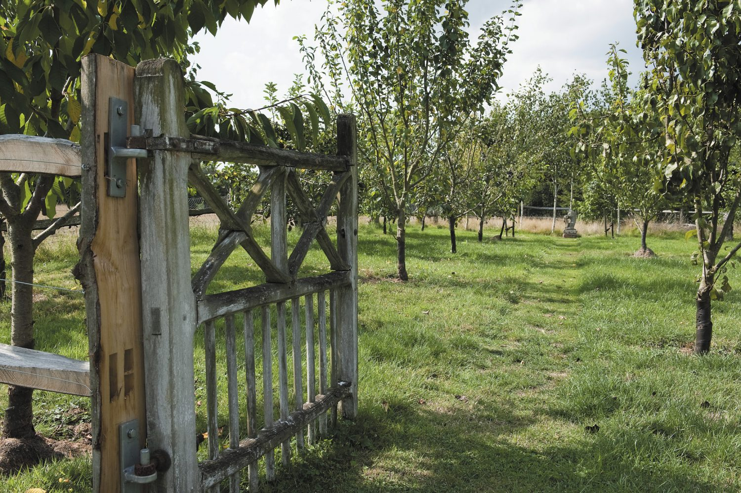 Molly's mixed orchard provides her with a whole host of delicious fruit including apples, plums, damsons, pears and quinces, to name but a few!