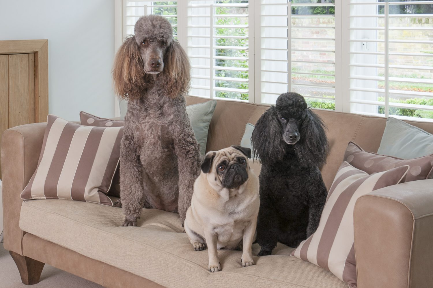 Coco, Violet and LuLu pose for a photograph
