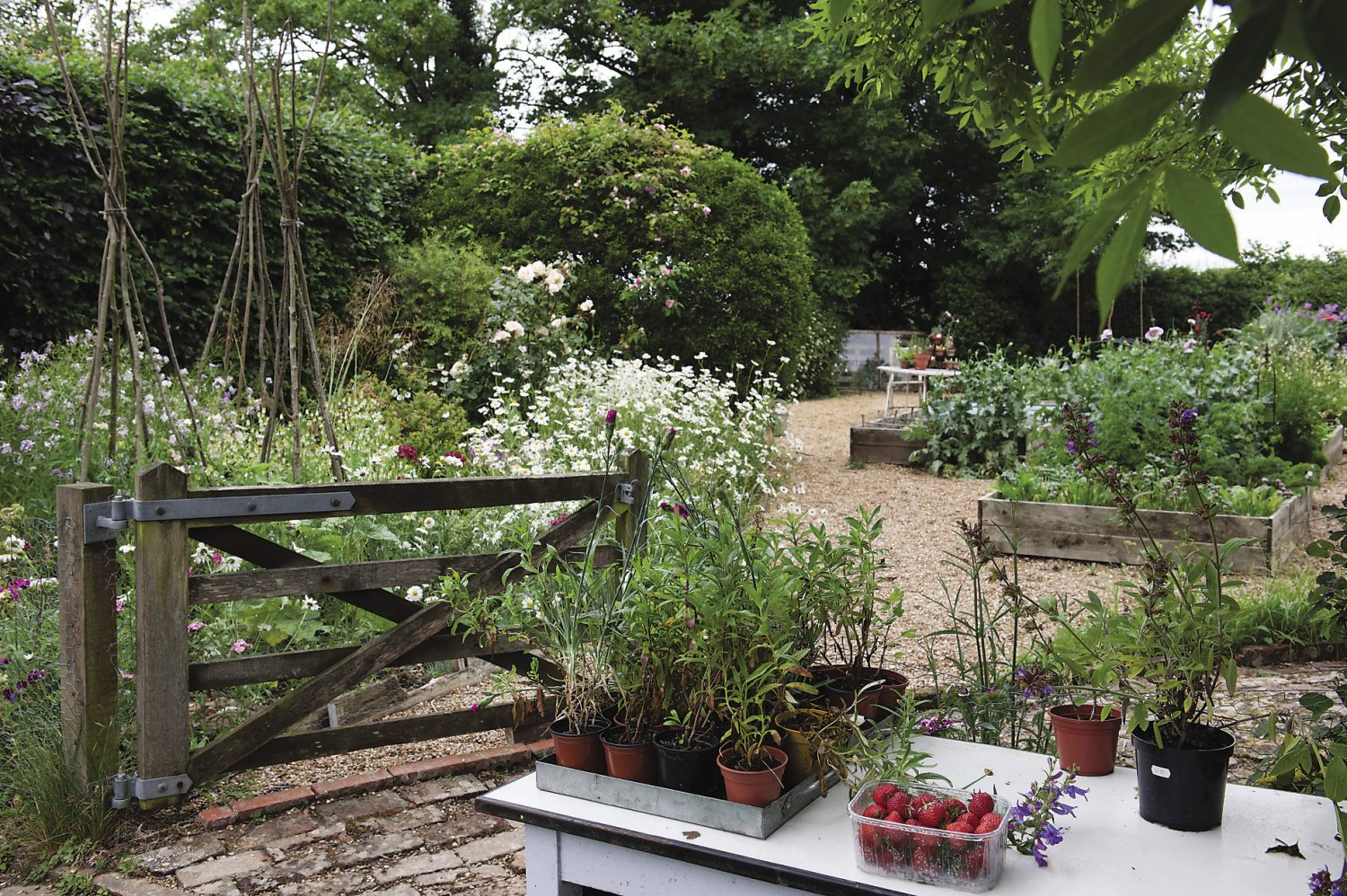 """The couple are in the process of restoring the gardens and have been fortunate to find a really talented professional gardener who previously worked """"next-door"""" at Charleston. First on the agenda was the kitchen garden. Polly and Shaun wanted to grow produce that could be cooked and offered to their guests."""