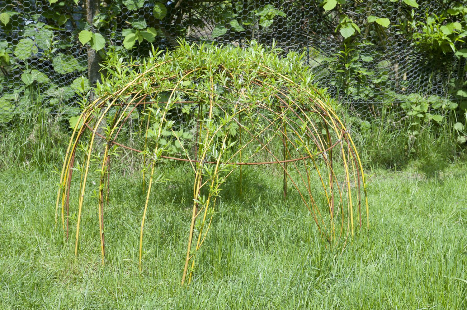 Bespoke pieces made by Rob from Cranbrook Iron are dotted around the garden including this willow-clothed garden den