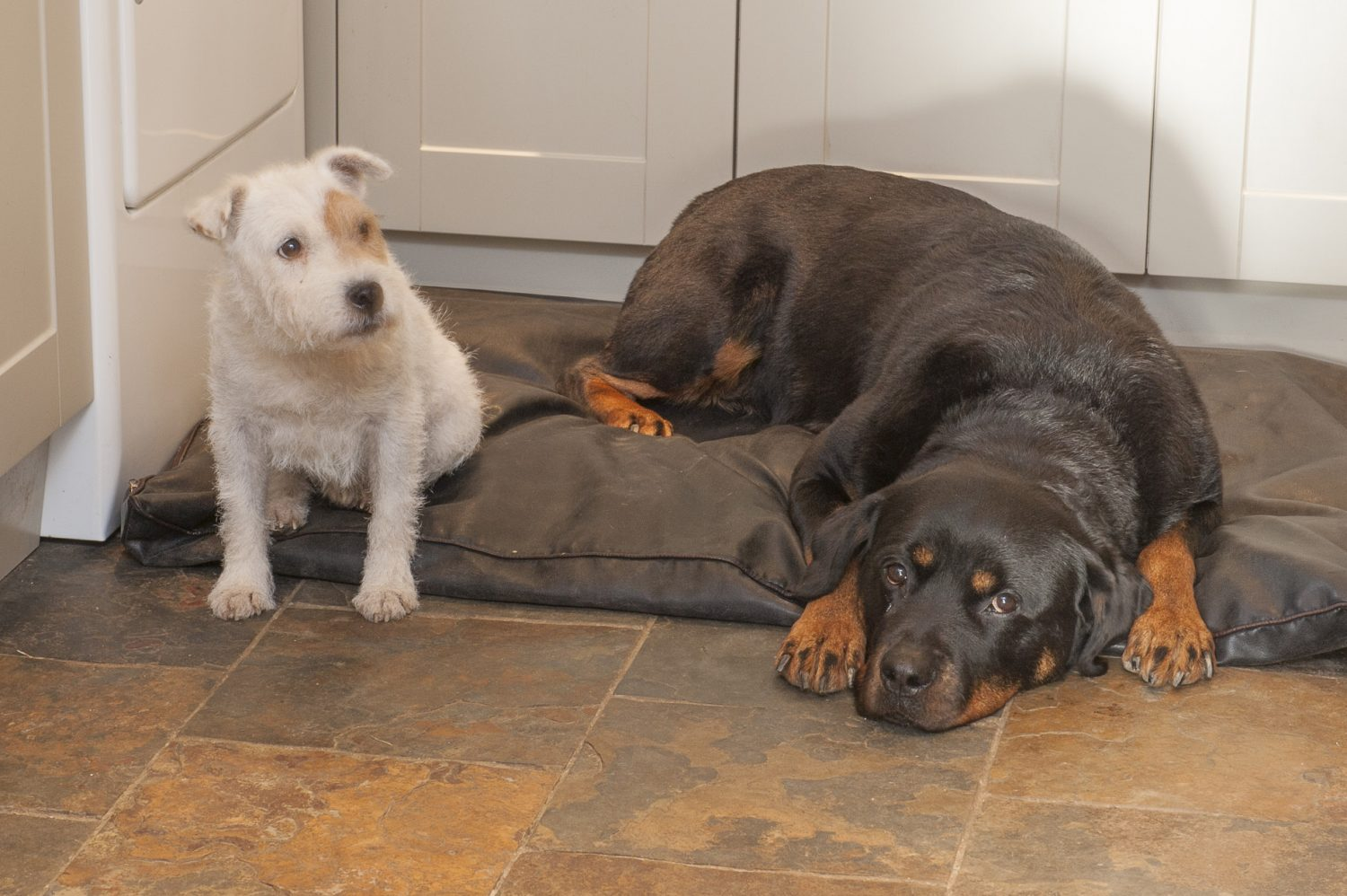 The couple's dogs, Murphy and Tinkerbell, snuggle up in the utility room
