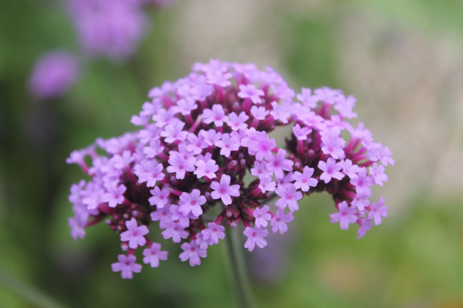 If you want to encourage self-seeders, try to start with a fairly weed-free garden