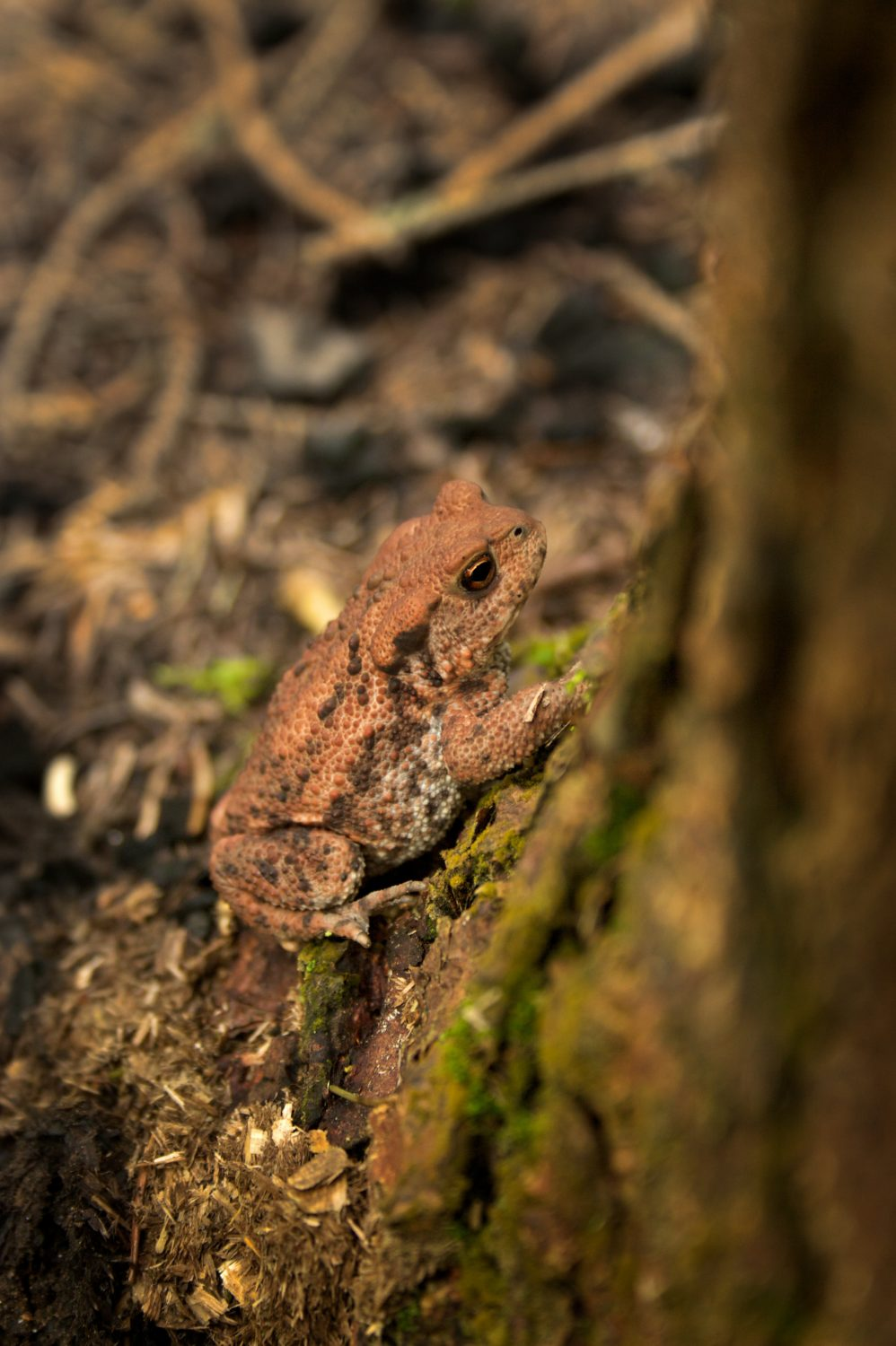 Leave a log pile in the corner of your garden to attract wildlife