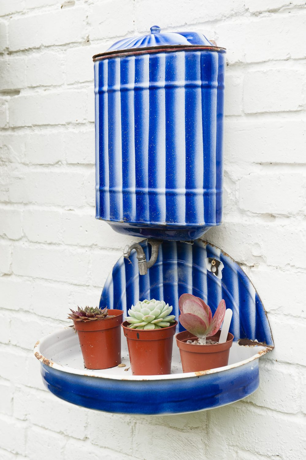 A striped water container has been re-purposed as a display shelf for succulents
