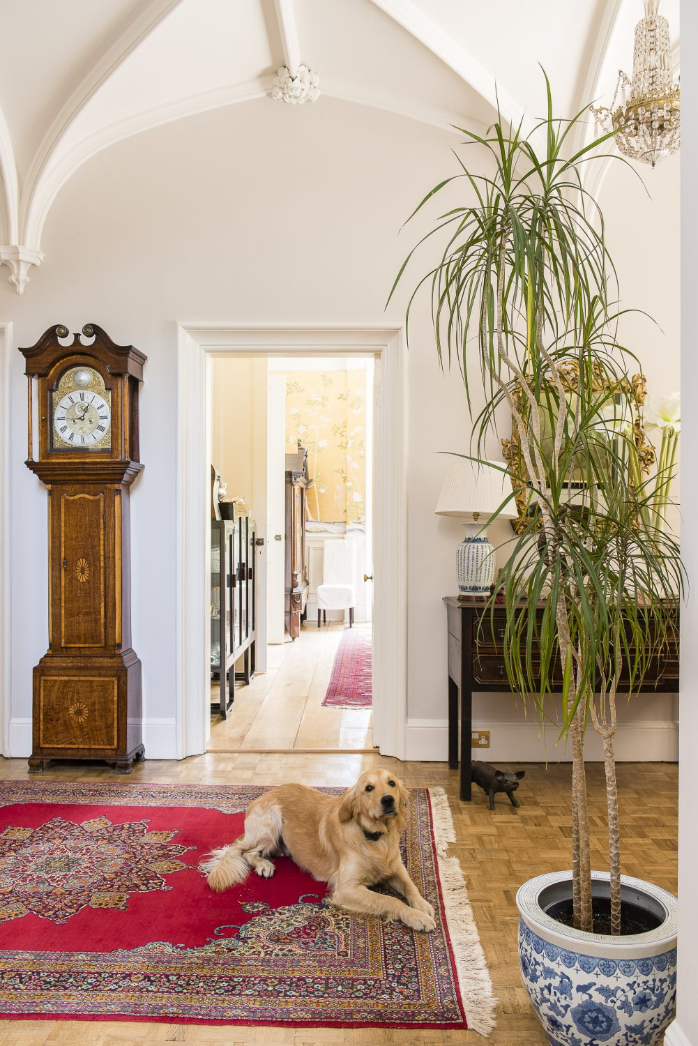 Potato the dog in the hall with vaulted ceilings in the Gothic Revival style