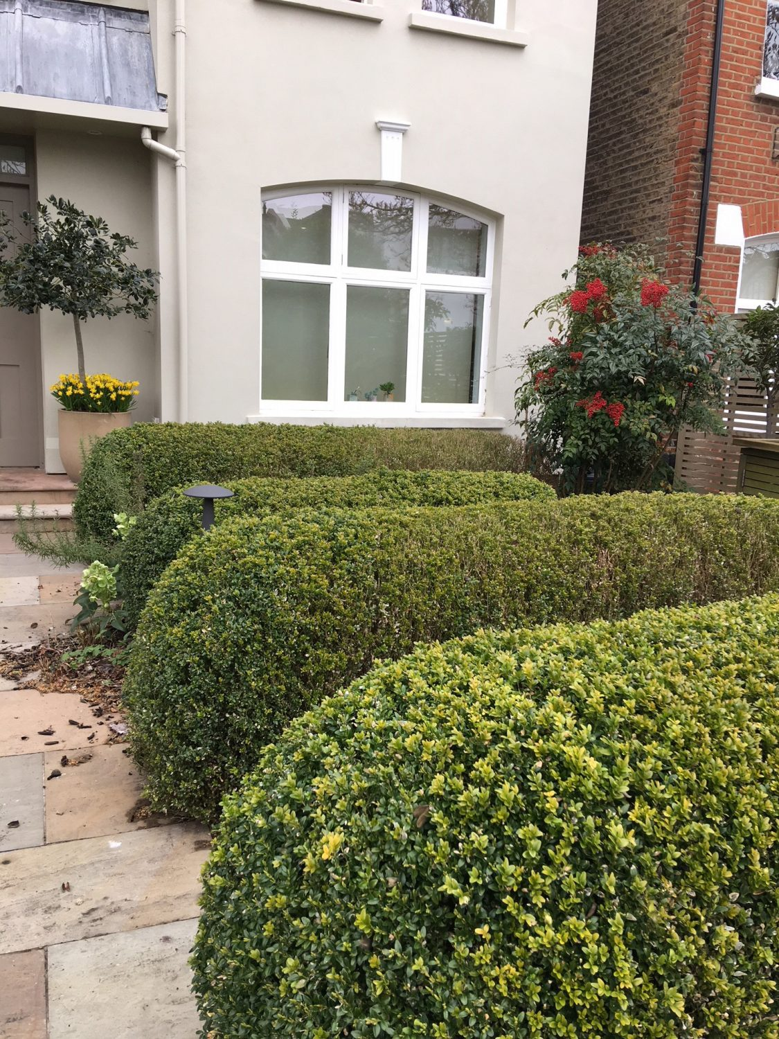 Lovingly tended box hedges in a Putney front garden