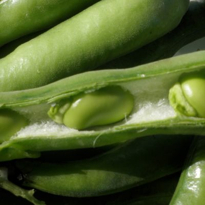 cool veg broad beans