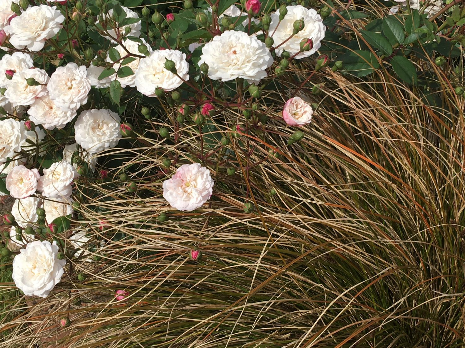 Grasses can provide a simple backdrop for flowers