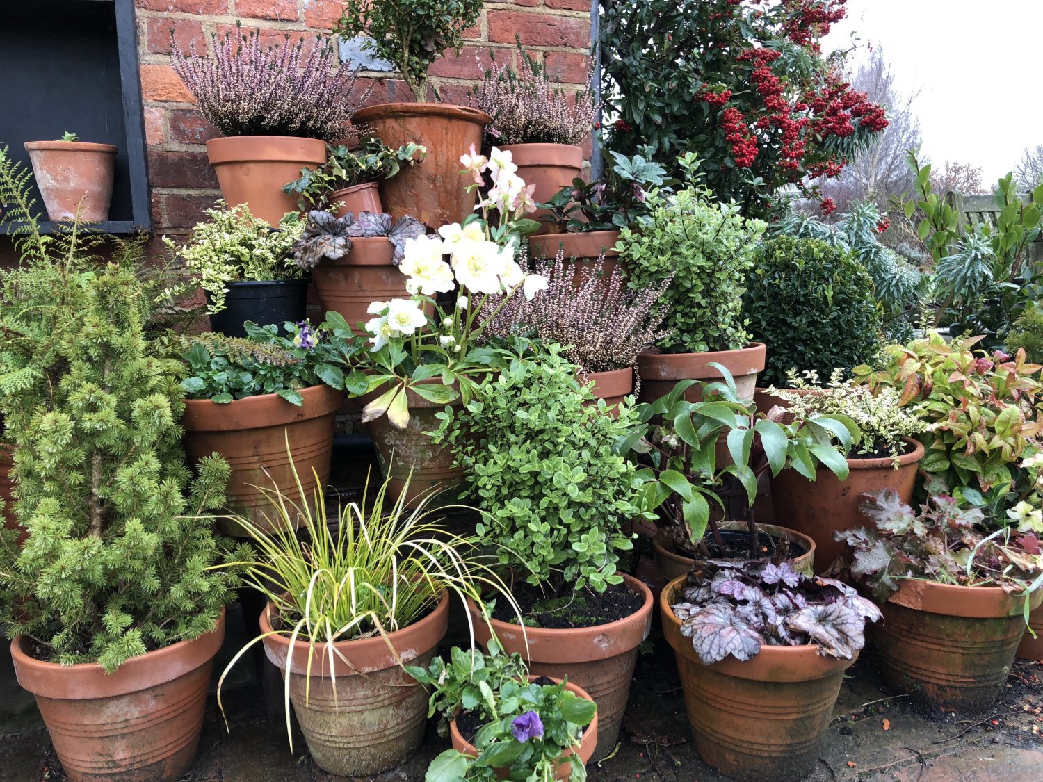 Pots cheer up a dull winter corner