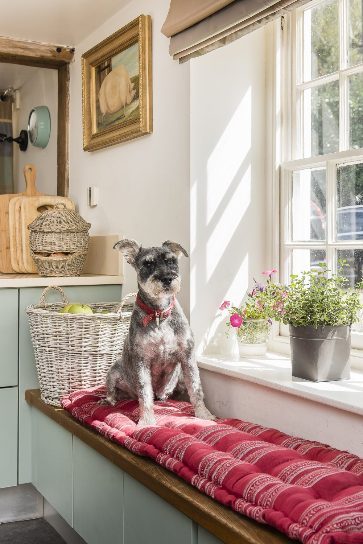 Bruno the dog appreciates the window seat cushion covered in Julia's fabric Memory Stripe