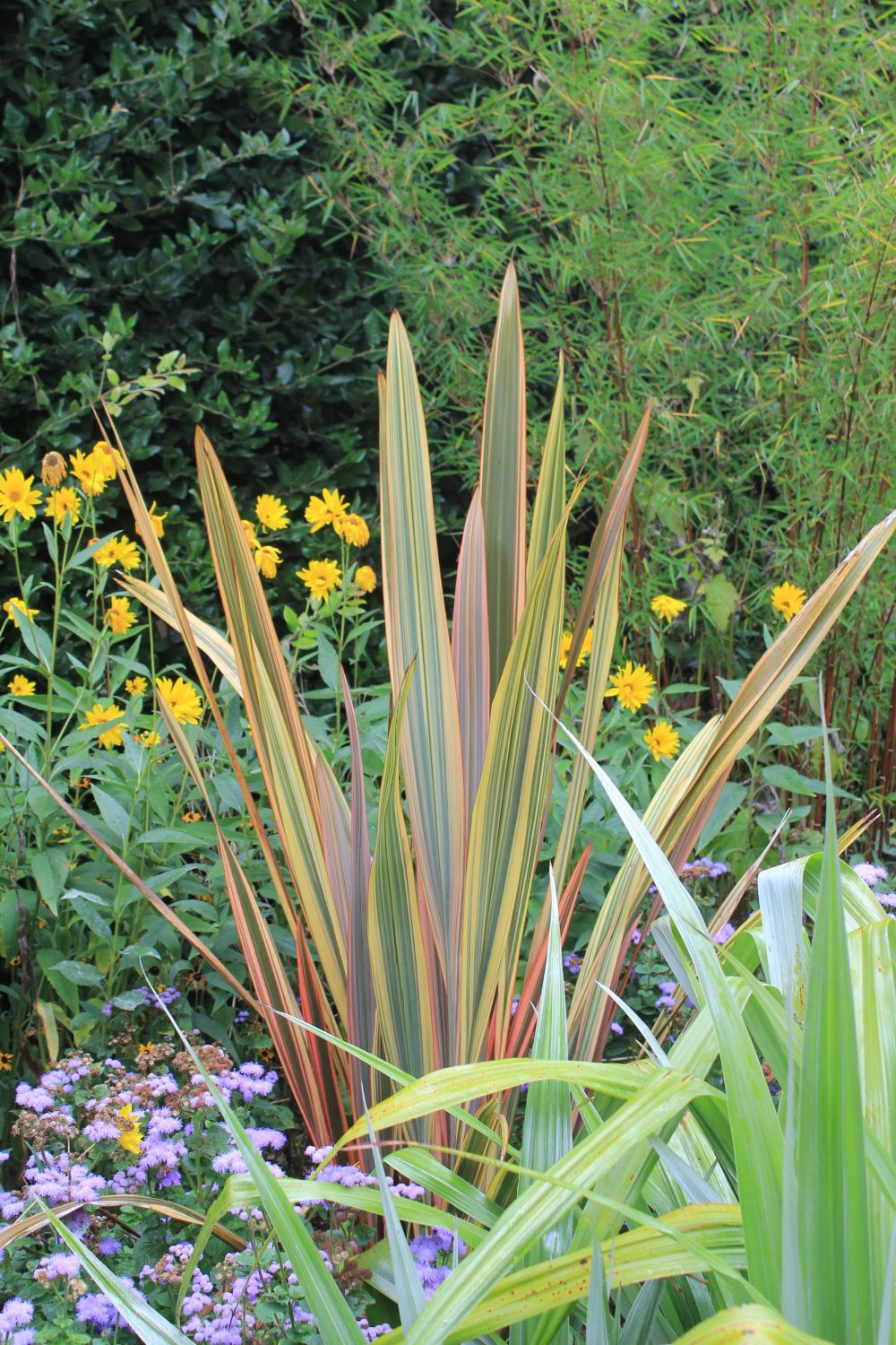 Phormiums provide striking border structure