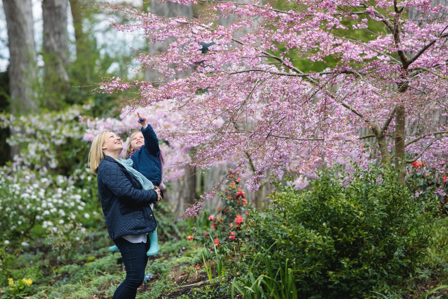 A mother and child look at Prunus 'Pink Ballerina' blossom in spring at RHS Garden Wisley. RHS / Georgi Mabee