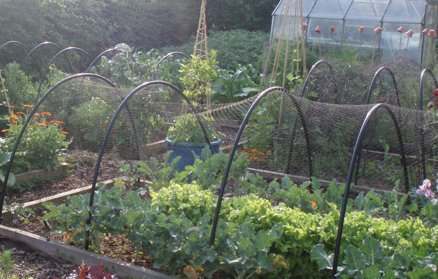 Use netting to protect crops from pests
