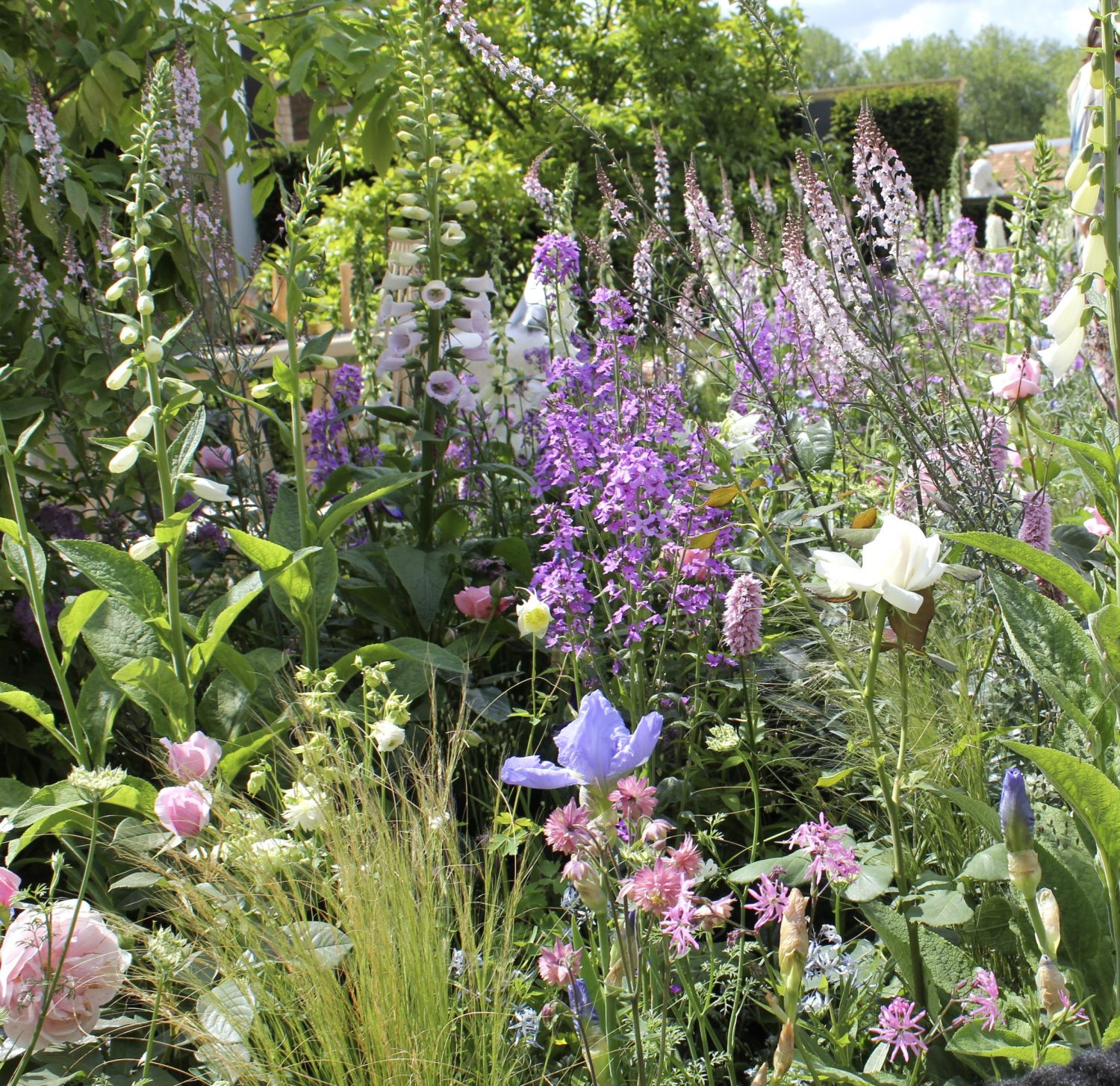 A joyful jumble of cottage garden plants