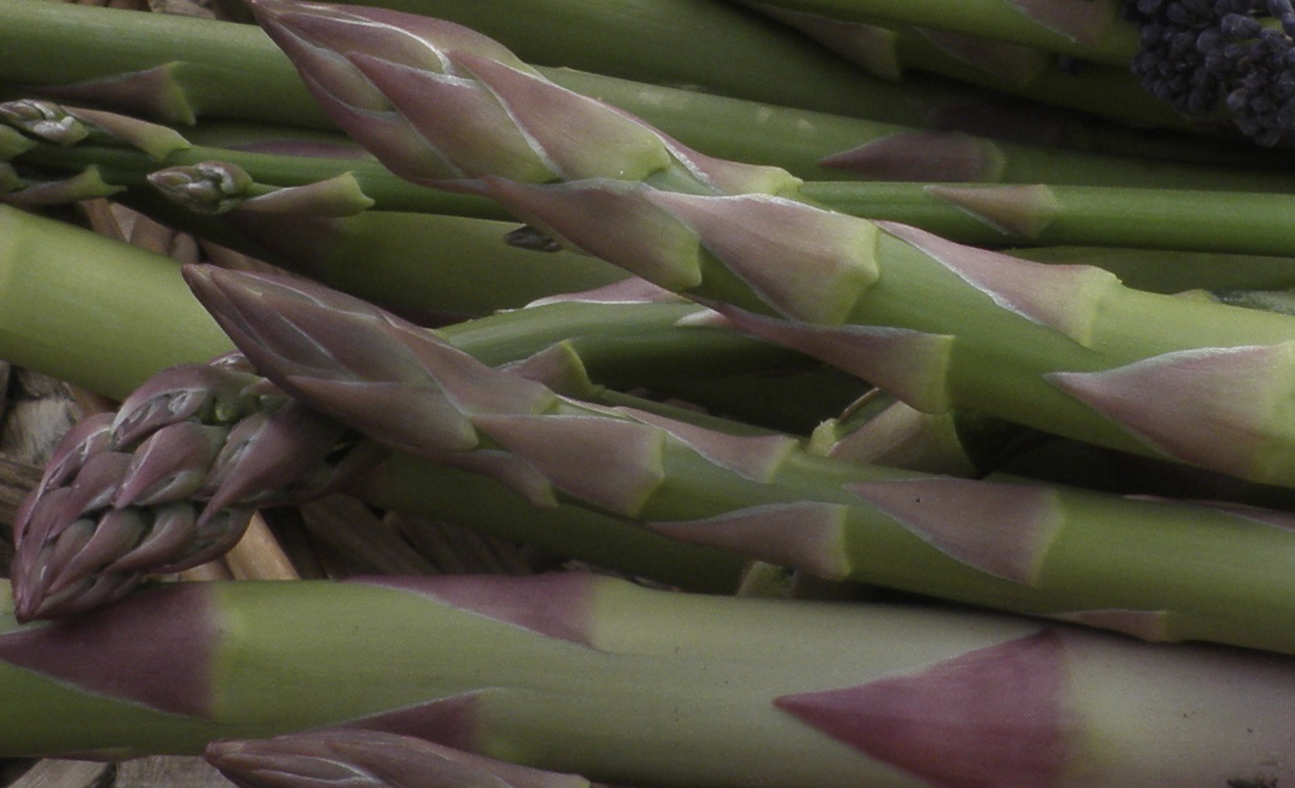 Asparagus can be picked up until the Solstice
