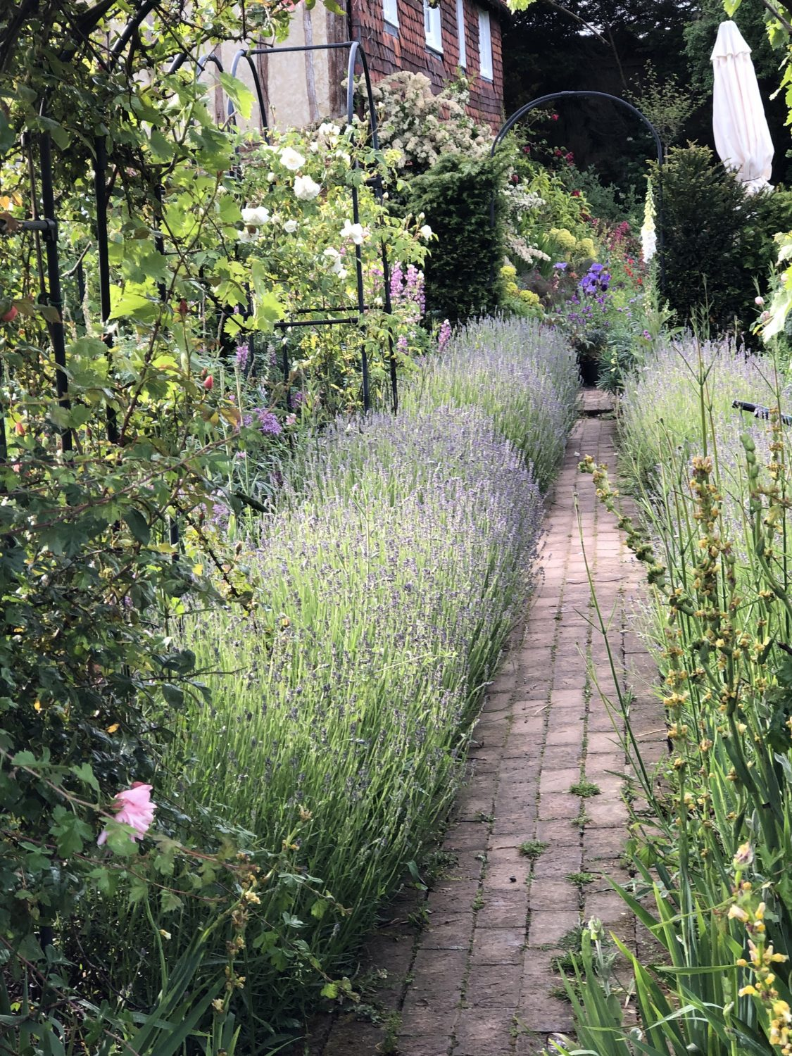 A lavender hedge will keep the bees happy for weeks