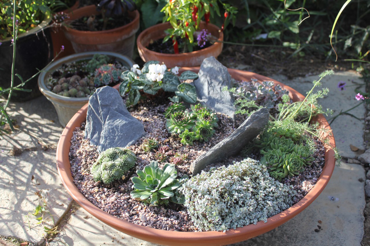 Grown on a small scale they can be used as miniature landscaping